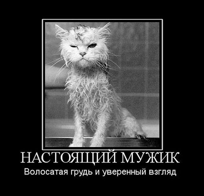 ПОДБОРКА ПРИКОЛЬНЫХ ДЕМОТИВАТОРОВ за 31.07.15