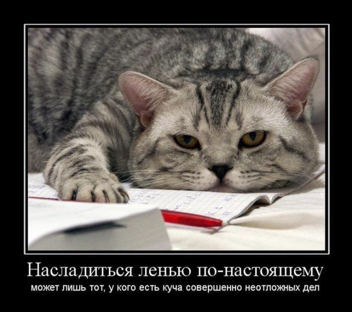 ПОДБОРКА ПРИКОЛЬНЫХ ДЕМОТИВАТОРОВ за 04.08.15