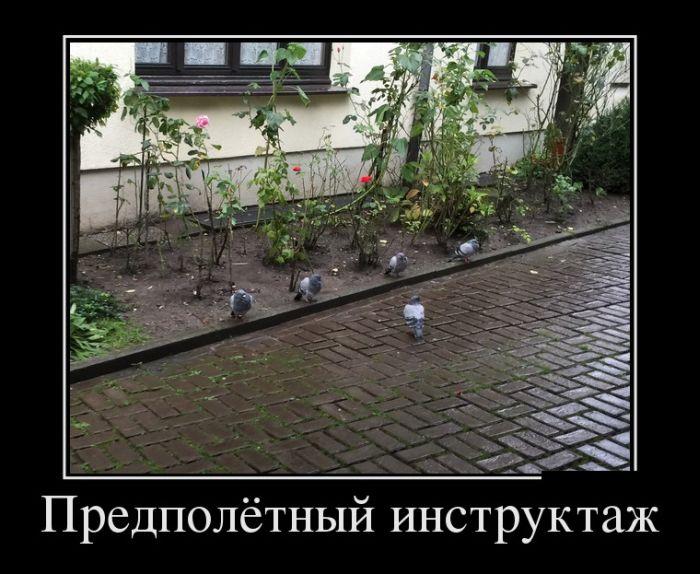 ПОДБОРКА ПРИКОЛЬНЫХ ДЕМОТИВАТОРОВ за 28.09.15