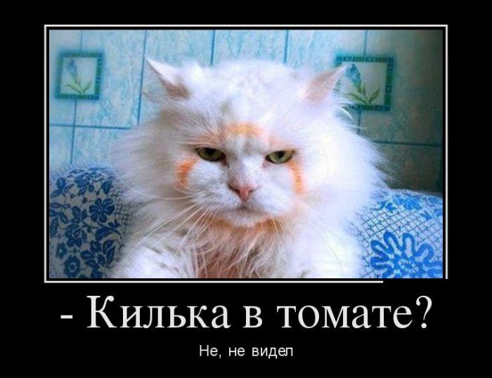 ПОДБОРКА ПРИКОЛЬНЫХ ДЕМОТИВАТОРОВ за 22.10.15