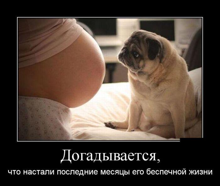 ПОДБОРКА ПРИКОЛЬНЫХ ДЕМОТИВАТОРОВ за 06.11.15